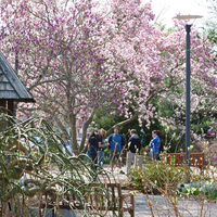 Guided Walk of UD Botanic Gardens Benefit Plant Sale Highlights