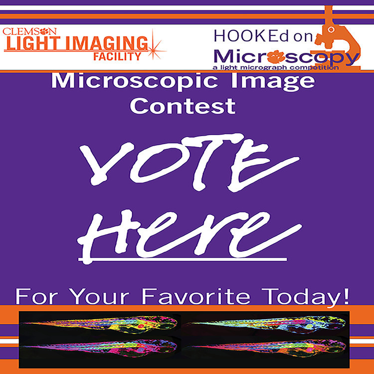 Live Voting for the HOOKEd on Microscopy Contest