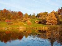 Fall Foliage Arboretum Hike