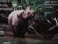 """Ending Centuries of Silence: Finding the Voice of the Javan Rhinoceros"""