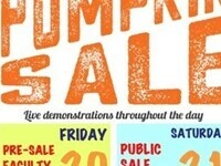 Glass Pumpkin Sale