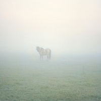 """Landscape Parables"", Artist Talk by Susannah Sayler"