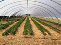 High Tunnel Greenhouse Vegetable IPM Workshop