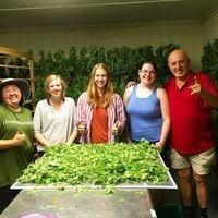 Class: Growing a Medicinal Tea Garden