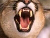 UCCS Lion's Den Pitch Night