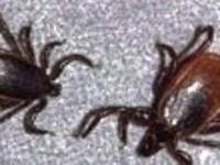 Keep Ticks Away!