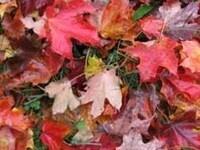 6th Annual Leaf Swap