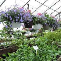 The Greenhouse of Martha's Vineyard