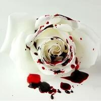 Acme Theatre Presents: The White Rose