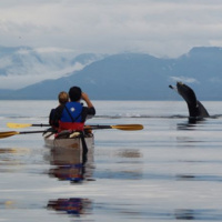 A Whale of an Adventure: Exploring Alaska by Sea Kayak