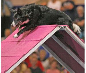 Canaan Dog Club of America All Breed Agility Trial