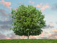 Arlington Technology Association: Texas Tree Ordinances