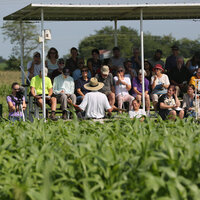 Vegetable Grower's Field Day