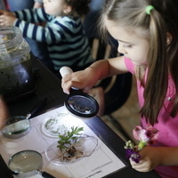 Free Museum Family Day: Learning from Nature
