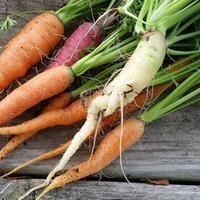 Seminole Organic Garden Workdays