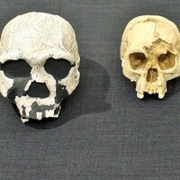 Human Evolution: Hot Topics in Paleoanthropology