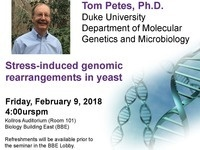 Stress-induced genomic rearrangements in yeast