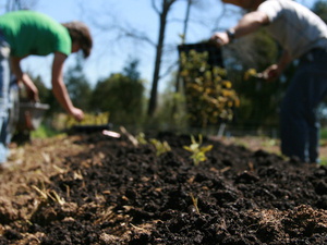 Shared Wisdom: Nurturing Ecological Faith