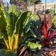 Robb Garden Farmers Market