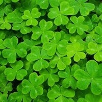 Shamrocks and Beyond