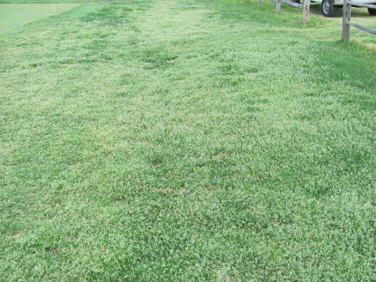 Poa Control Field Day
