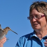 Saving Florida's Coastal Birds:  What Works? By Dr. Marianna Korosy, Ph.D