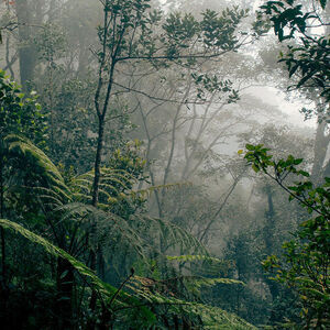 Borneo—A Disappearing Tropical Treasure