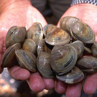 Biodiversity & Sustainability: Can We Have our Clams and Eat Them Too?