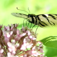 Planning Your Butterfly Garden