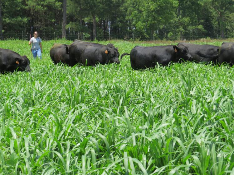 South Carolina Cattlewomen's Shortcourse SALUDA
