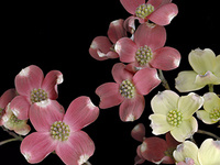 Sweep of Light: Scanner Photography and the Art of Horticulture