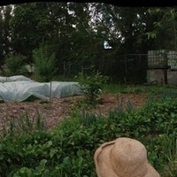 Sustainability Roundtable: Urban Farming & Orchards on Vacant Lots