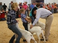 SC 4-H/FFA Meat Goat Project Registration