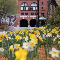 Spring recess begins for Degree programs