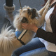 Therapy Dogs in the Library - Canine Therapy Corps