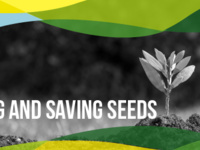 Event image for Living Sustainably Along the Lakeshore - Community Knowledge: Planting and Saving Seeds