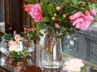 Lan Su in Bloom Camellia Display