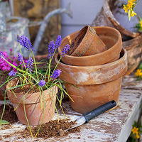 Container Gardening Workshop