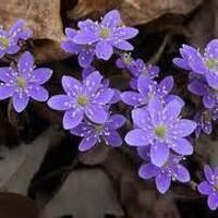 Spring Wildflower Hike