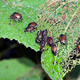 Organic Pest Management / Growing Gardeners Workshop Series