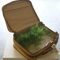 Reclaimed Baggage