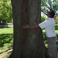 Spring 2018 Campus Tree Advisory Committee Meeting