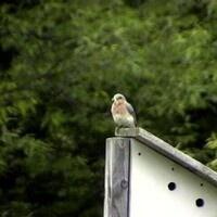 Nest Box Volunteer Training