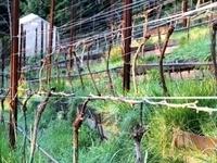 Fullerton Wine Course: Soil Session