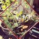 Make Your Own Habitat // WORKSHOP