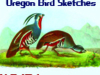 ALDancers 15 Years – Oregon Bird Sketches