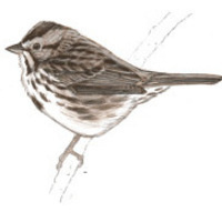 John Muir Laws Nature Drawing and Journaling Workshops