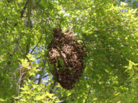 Swarm Catching Talk