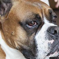 Exam Break: Pet Therapy