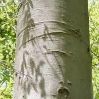 Tree ID Hike